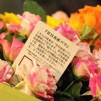 🌹父の日月間 はつかいち産バラ 合計12名様プレゼント!